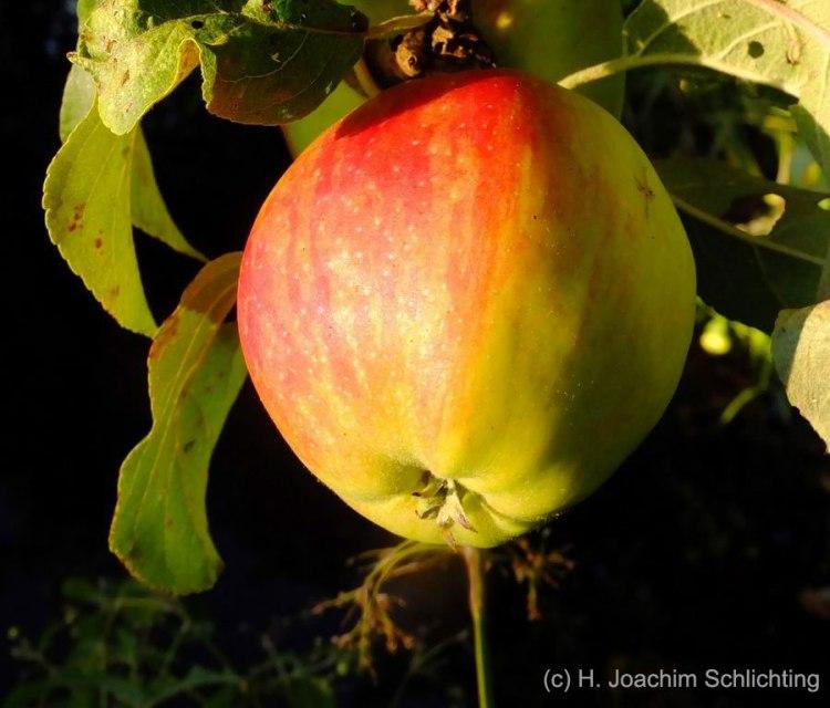 Apfel-als-Erde